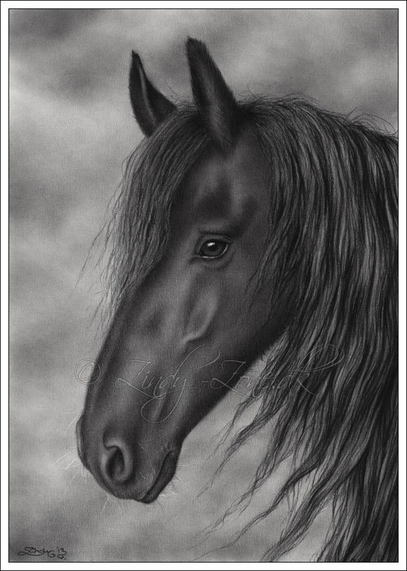 Black Horse Beauty Pet Animal Zindy Nielsen Etsy