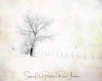 Winter Photograph, Tree Photography, Winter Tree Photography, Serenity, Calm, Peaceful, Mixed Media, Canvas Print, Wall Art, Wall Decor