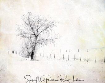 Winter Photograph, Tree Photography, Winter Tree Photography, Serenity, Calm, Peaceful,  Mixed Media, Digital Art, Wall Art, Wall Decor