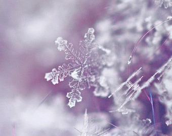 Snowflake -Winter Photography- Fine Art Print- Snowflake Photograph-Original Macro Photograph- 5inches by 5 inches-Winter-Purple and White
