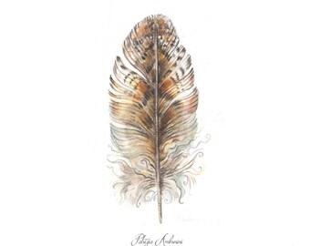 Handpainted,Original Watercolour study,4x6, Feather Study No.90 Painting, fine art . NOT A PRINT ,owl , Origina