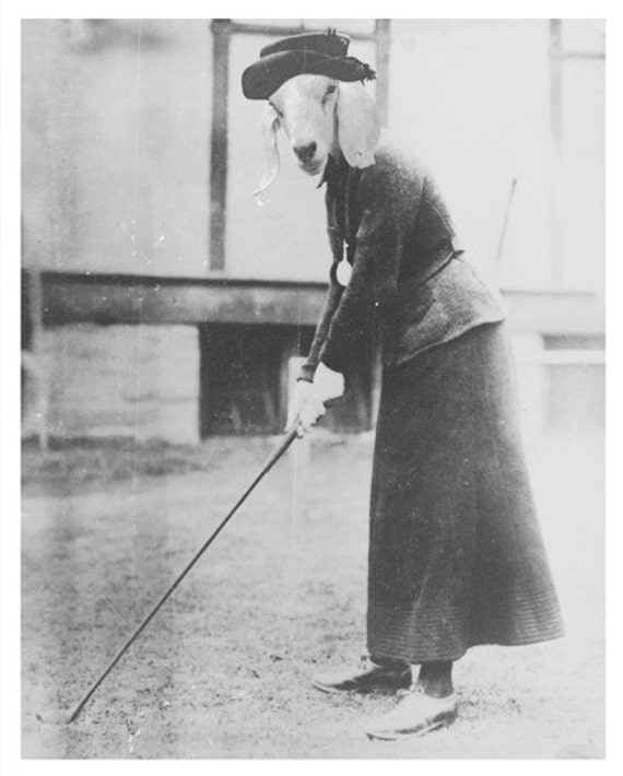 Funny Animal Photography Goat In A Suit Golfing 8x10 Print Etsy
