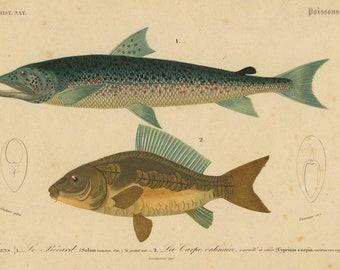 lot 130.superbe Fish dish royal ASCOT Dish has fishes.
