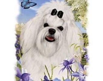 Maltese Flower Dog Womens Short Sleeve T Shirt 16587HL4