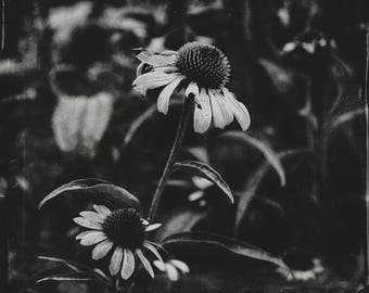 Prison Flowers - Black & White Digital Photographic Print, Dark Photography, Floral Wall Art, Home Decor, Nature Photography