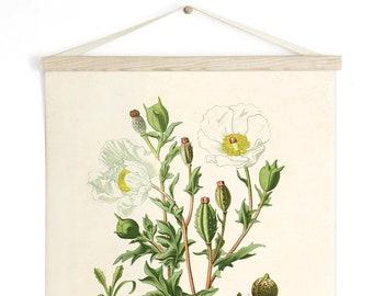 Pull Down Chart - Botanical White Mexican Poppy Reproduction Print. Vintage Science Plate Print Edcuational Diagram Flower - B017CV