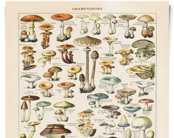 Vintage French Mushroom Print - Botanical Diagram reproduction. French Champignons from Le Petit Larousse by Millot - B032P