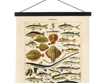 Pull Down Chart - Vintage Poissons French Fish Chart. Le Petit Larousse Illustré by Millot. Educational Seal life animals.