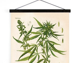 Marijuana Pull Down Chart - Botanical Cannabis Sativa Diagram Print. Educational Poster Kohler's Botanical. Medicinal Plant Guide - B002CV