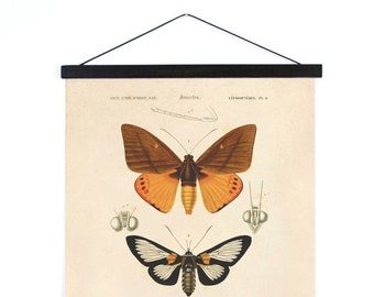Hanging Canvas Chart - Moth Diagram Print by d'Orbigny Vintage Reproduction. Dictionnaire universel d'histoire naturelle. - A030CV