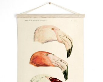 Pull Down Chart - Flamigo Print - Vintage French Zoology Canvas - Illustrated by Alphonse Tremeau de Rochebrune - Educational Birds - A023CV