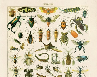 Vintage French Insects Print 2. Variety of Insects Educational Chart by Adolphe Millot Science Entomology Bugs - A028P