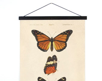 Hanging Canvas Chart - Butterfly Diagram Print by d'Orbigny Vintage Reproduction. Dictionnaire universel d'histoire naturelle. - A030CV