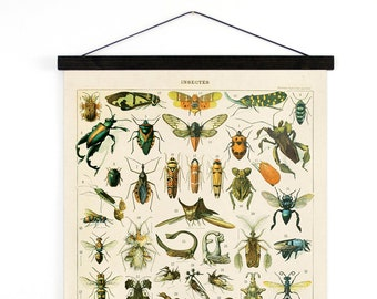 Pull Down Chart - French Insects Diagram Canvas Hanging Print.  Le Petit Larousse French Encyclopedia by Millot Entomology Bugs - A028CV