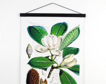 Vintage Botanical Magnolia Pull Down Chart. Vintage Science Plate Educational Diagram Flowers Garden Seed Packet Louisiana Southern - B033CV