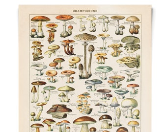 Vintage French Mushroom Diagram Print. Le Petit Larousse Champignons by Millot. Fungi Educational Chart Diagram - B032P