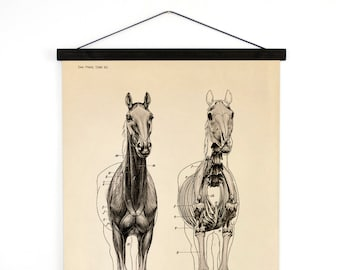 Vintage Horse Anatomy Pull Down Chart - Canvas Print. Skeleton Biology Zoology Science Animal Study Print - A019CV
