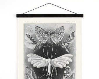 Haeckel Pull Down Chart - Moths and butterflies Reproduction Print wall hanging. Tineida Vintage German Science Insects Diagram - A005CV