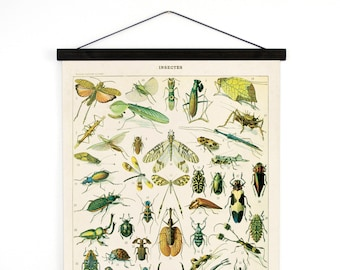 Pull Down Chart - Insects Diagram Reproduction Canvas Print.  Le Petit Larousse French Encyclopedia by Millot Entomology Bugs CP255cvL
