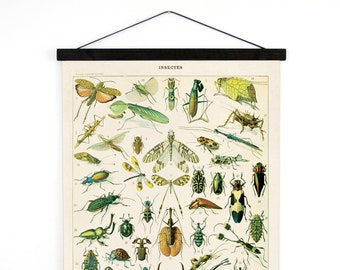 Pull Down Chart - Insects Diagram Reproduction Canvas Print.  Le Petit Larousse French Encyclopedia by Millot Entomology Bugs