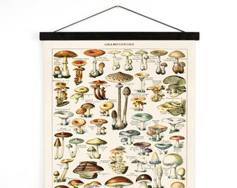 Mushroom Poster Canvas - Pull Down Chart - Reproduction of vintage print from Le Petit Larousse by Millot Champignons fungi - B032CV