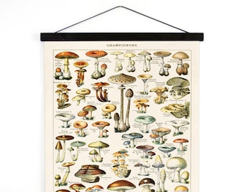 Pull Down Chart  Mushroom Botanical Print - Le Petit Larousse Champignons by Millot Canvas Wall Hanging vintage Reproduction - B032CV