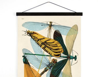 Pull Down Chart - Vintage damselflies Illustration Reproduction. French Seguy Plate 9 Variety of Dragonflies Poster. Entomology - A007CV