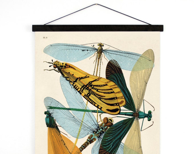 Featured listing image: Pull Down Chart - Vintage damselflies Illustration Reproduction. French Seguy Plate 9 Variety of Dragonflies Poster. Entomology CP274cv