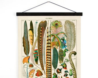 Pull Down Chart - Feather Plumes Print - French Le Petit Larousse feathers by Millot. Handmade Wall Hanging Vintage Reproduction - CP201CV