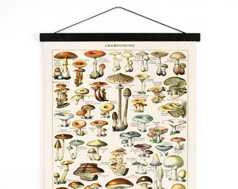 Mushroom Poster - Pull Down Chart style Wall hanging Illustration by Adolphe Millot - Fungi Educational Diagram Handmade  CP239cv