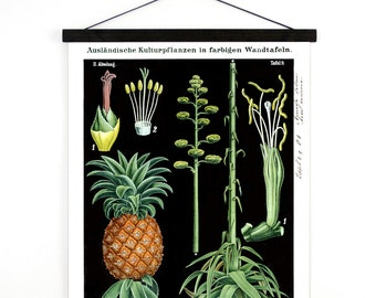 Pull Down Chart - Pineapple and Agave Botanical Print Vintage Reproduction. Science Poster Plate Educational Botany Diagram - B028CV