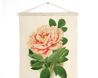 Pull Down Chart - Peony Flower Vintage Botanical Reproduction Print. Educational Diagram Botany Garden Rose Poster - B023CV