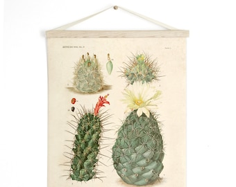 Pull Down Chart - Vintage Palm Springs Botanical Cactus Print Plate II. Educational Chart Diagram Cactus Desert Poster flowers - C009CV
