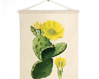 Pull Down Chart - Prickly Pear Cactus Vintage Botanical Reproduction Print. Educational Diagram Botany Succulent Poster - C011CV