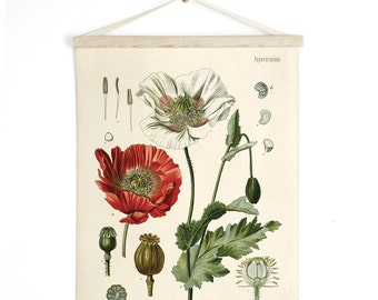 Pull Down Chart - Botanical Papaver somniferum Opium Poppy Print. Educational Diagram Poster from Kohler's Botanical. Flower Garden - B013CV