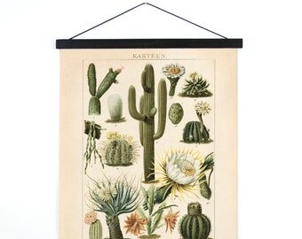 Pull Down Chart - Canvas Palm Springs Cactus Diagram Print. Vintage Kakteen Botanical Desert Educational Wall Hanging