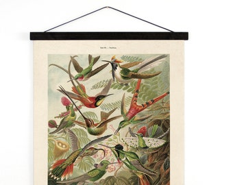Pull Down Chart - Vintage Hummingbirds Canvas Hanging Reproduction Print. Haeckel Vintage Science Plate. Educational Diagram