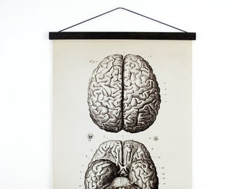 Pull Down Chart - Vintage Anatomy Brains Print - Medium Size Reproduction Canvas Wall Hanging - Biology Educational Diagram Poster - AT002CV