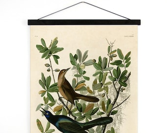 Pull Down Chart - Grackle Audubon Bird Illustration Vintage Reproduction - Boat tailed Grackle Zoology austin biology science CP277cv