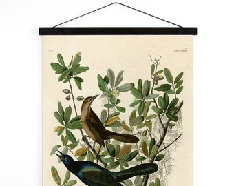 Pull Down Chart - Grackle Audubon Bird Illustration Vintage Reproduction - Boat tailed Grackle Zoology austin biology science - A026CV