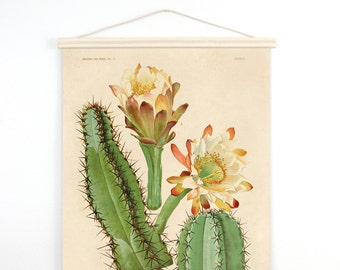 Pull Down Chart - Vintage Palm Springs Botanical Cactus Print Plate II. Educational Chart Diagram Cactus Desert Poster flowers - C005CV