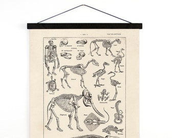Vintage Animal Skeletons Handmade Canvas Hanging Chart. Illustrated by Millot for Le Petit Larousse