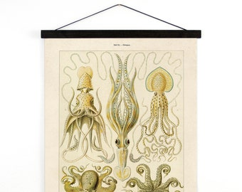 Pull Down Chart - Vintage Octopus Canvas Hanging Reproduction Print. Haeckel Vintage Science Plate. Educational Diagram