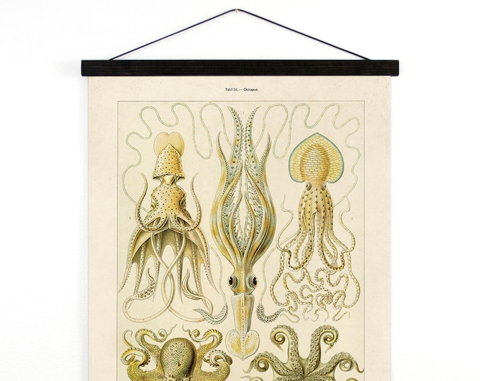 Featured listing image: Pull Down Chart - Vintage Octopus Canvas Hanging Reproduction Print. Haeckel Vintage Science Plate. Educational Diagram