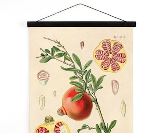 Pomegranate Pull Down Chart - Botanical Fruit Reproduction Print. Educational Chart Diagram Poster from Kohler's  Botanical Poster - B034CV
