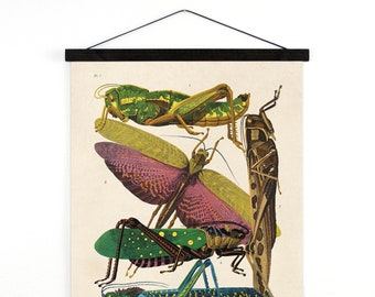 Pull Down Chart - Vintage grasshopper, cricket and other insect Illustration Reproduction Canvas Chart. French Seguy Entomology