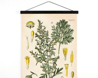 Wormwood Pull Down Chart - Vintage Botanical Absinthe Artemisia Absinthium Reproduction Print - Kohler's Medicinal Plant Guide - B015CV