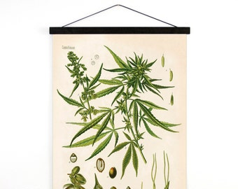 Marijuana Pull Down Chart - Vintage Botanical Cannabis Sativa Diagram Reproduction Print - Kohler's Botanical Medicinal Plant Guide - B002CV