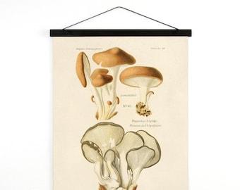 Hanging Canvas Chart - Mushroom Print. Pleurotus ostreatus (oyster mushroom). Fungi Educational Chart Diagram - B037CV