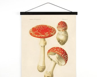 Hanging Canvas Chart - Mushroom Print. Magic Mushroom fly agaric. Fungi Educational Chart Diagram - B035CV